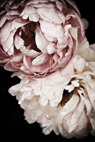 by ZsaZsa Bellagio, Pinterest